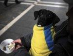 Все через ЖКХ: Киев разрушил последнюю надежду украинцев на безбедную жизнь