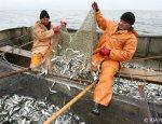 Россия вошла в число успешных стран по развитию рыбопромышленности