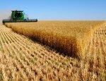 Аграрный подъем: Россия покоряет китайский рынок