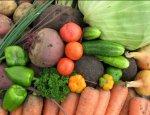 Прорыв Дальнего Востока: новый способ повысить урожайность овощей