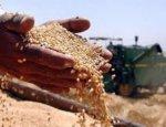 Bloomberg: США могут обойти Россию в зерновой войне