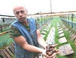 На улитках в Европу: фермеры Незалежной развивают новый бизнес