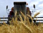 Новый контракт: Сирия закупает все больше российской пшеницы