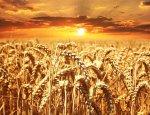 Украина вылетает в трубу, несмотря на квоты поставок продукции в ЕС