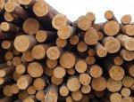 Шантаж по-европейски: Брюссель позарился на украинский лес