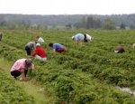 Аграрная сверхдержава: Каждый шестой украинец работает в поле задом кверху