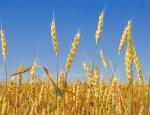 Томатно-пшеничная война продолжается: Турция ввела новые санкции