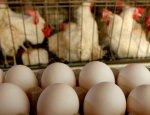 Россияне инвестируют в птицефабрику в Перевальском районе ЛНР