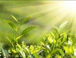 Алтайские ученые изобрели новый способ, как быстро выращивать растения
