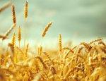 Аграрии ЛНР в 2017 году засеют все запланированные площади сельхозугодий