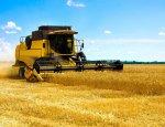 Аграрии выращивают зерно, а посредники на нём зарабатывают