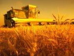 Новинка в российском сельском хозяйстве: облучение может быть безопасным