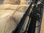 Экспорт русской пшеницы в Турцию вырос в четыре раза несмотря на пошлины
