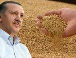 Эрдоган развязал против России зерновую войну