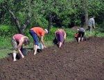 Всё на продажу: когда на Украине примут закон о свободной торговле землей