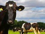 Ставропольские фермеры грозятся устроить марш коров против ветеринаров