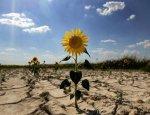 Херсонская проблема Украины: водная блокада Крыма ударила «по своим»