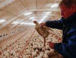 Русские курицы перейдут все границы