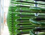 Ученые РФ разработали прототип устройства для получения биотоплива из света