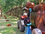Россия сокращает закупки пальмового масла