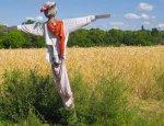 В этом году в России будет неурожай: кудринская секта ставит крест на селе